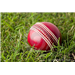 New Zealand v West Indies: Dec 5, 2013